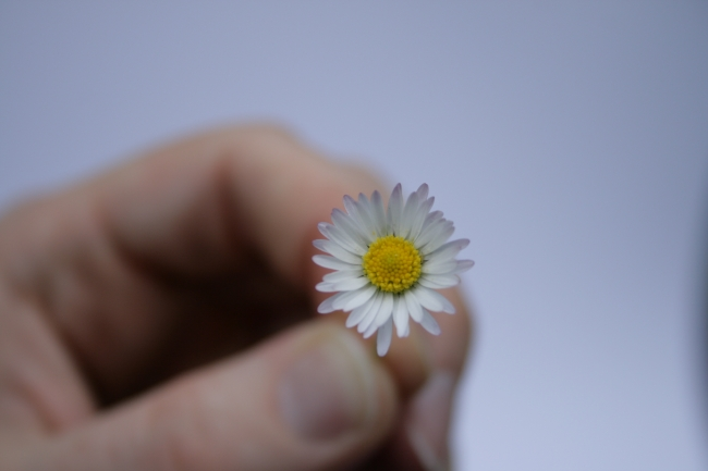 A small flower in hand,