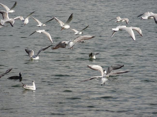 Möwen 2, Starnberger See