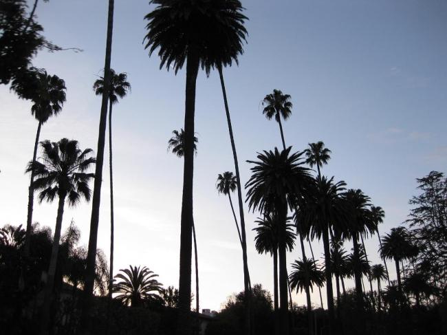 Palms against the sky,