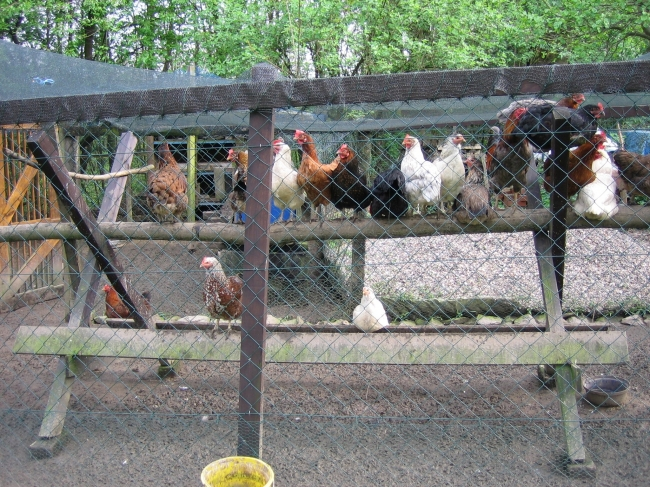 Hühnerstall,
