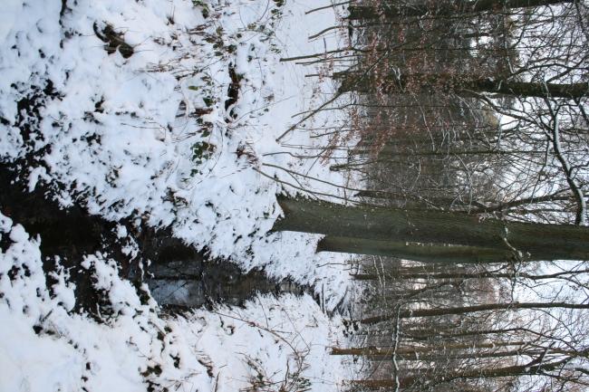 Winterlicher Wald 2,