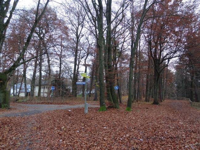 Wald im Isartal,