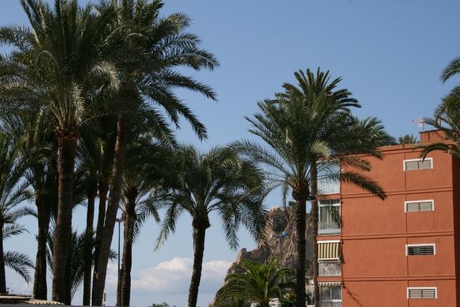 IMG_10063_Vor dem Hotel El Palmeral.JPG,