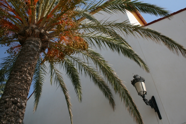 Palm at the castel,
