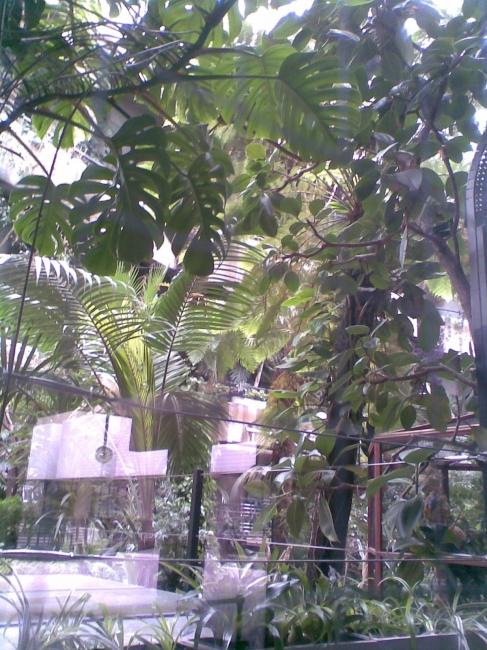 Barbican Conservatory,