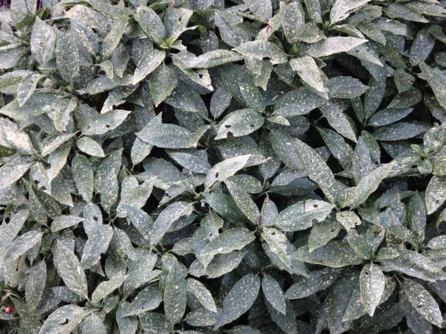 Blätter,