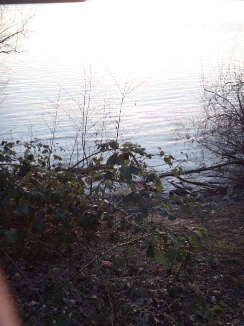 Am Ufer des Wolfsees,
