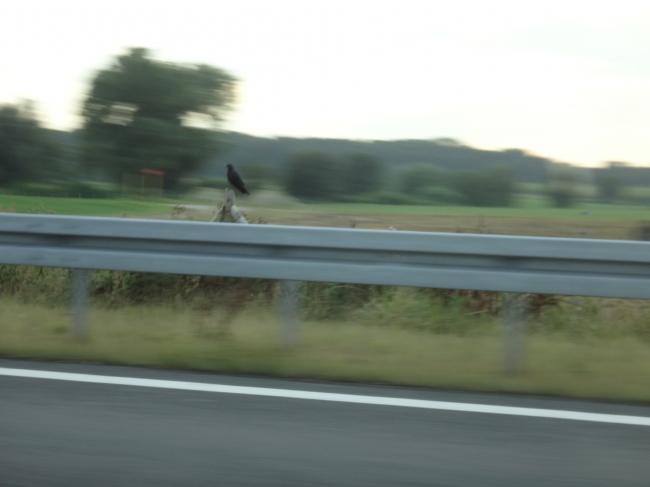 Brdn on Autobahn pillar,