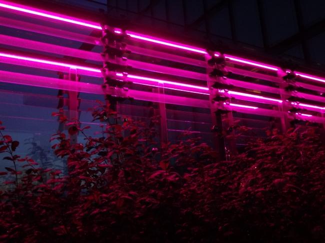 Neon 2 @ Hyatt,
