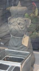 Grumpy dog king