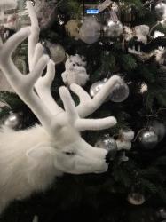 White reindeer on a de...